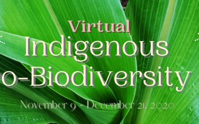 Celebrating Resilience: NAFSA's First Virtual Indigenous Agro-Biodiversity Fair